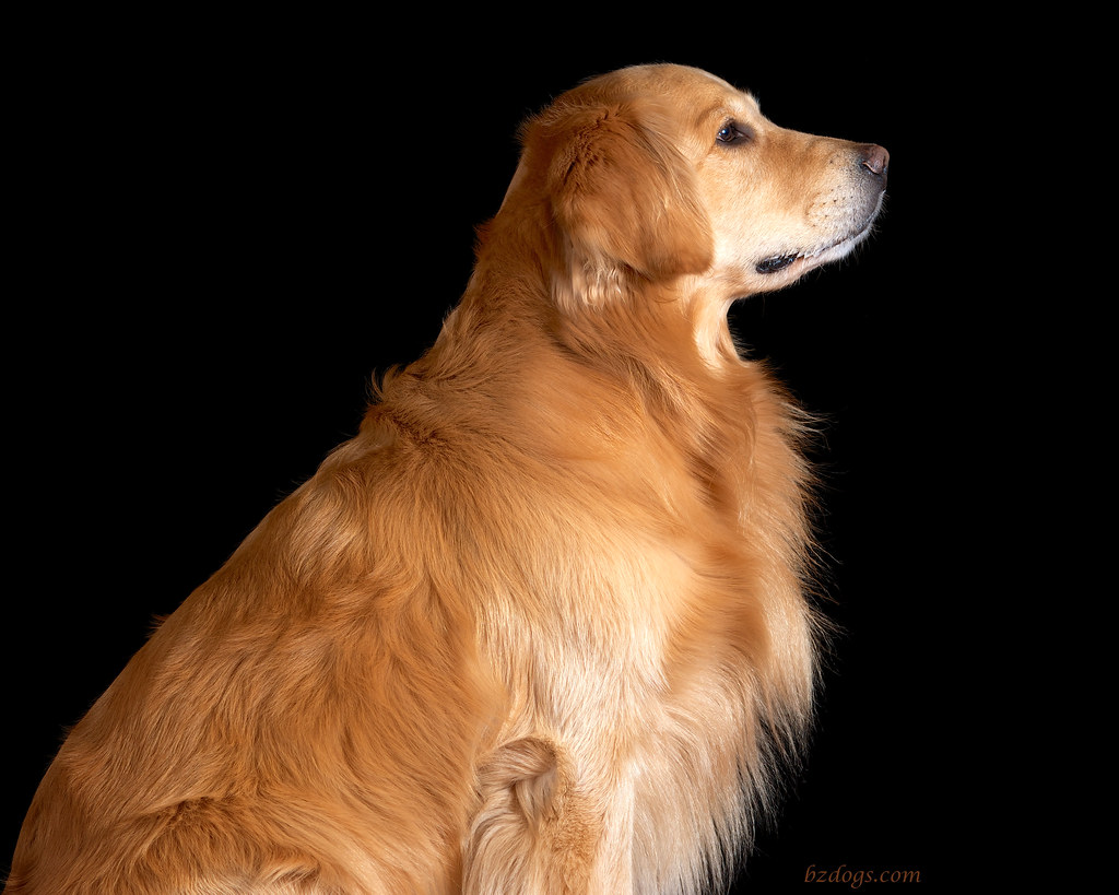 Profile of a Dog