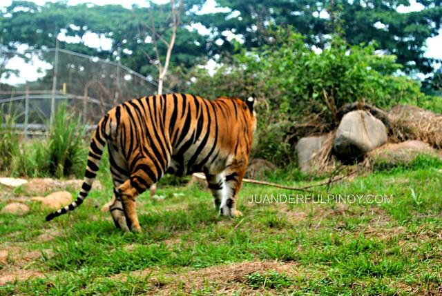 zooperb shots at zoobic safari