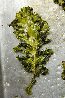 kale leaf for kale chips