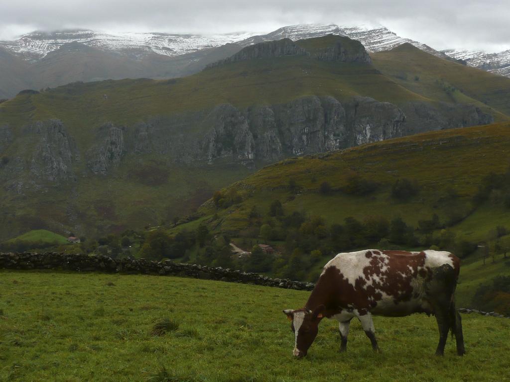 Vaca paciendo en un prado de montaña. Autor, Jozelui
