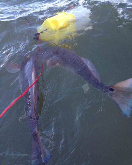 Tips fishing spots bait tides catch big fish sarasota fl 5 for Fishing spots finder