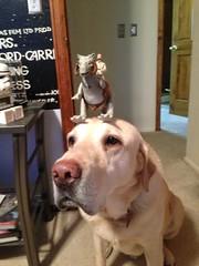 animal(1.0), pit bull(1.0), dog(1.0), pet(1.0), mammal(1.0), animal shelter(1.0),