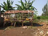 low cost goat shed