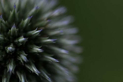 spiky softness