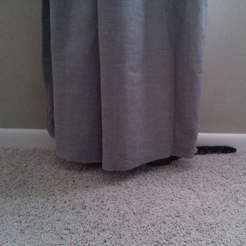 We finally hung curtains in our bedroom this weekend. Haven't seen the cat since.
