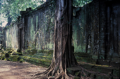 Ta Prohm - Tree in Front of Wall by Drriss & Marrionn