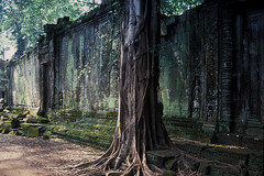 Ta Prohm - Tree in Front of Wall ( Explored 4 okt 2013, #127 )