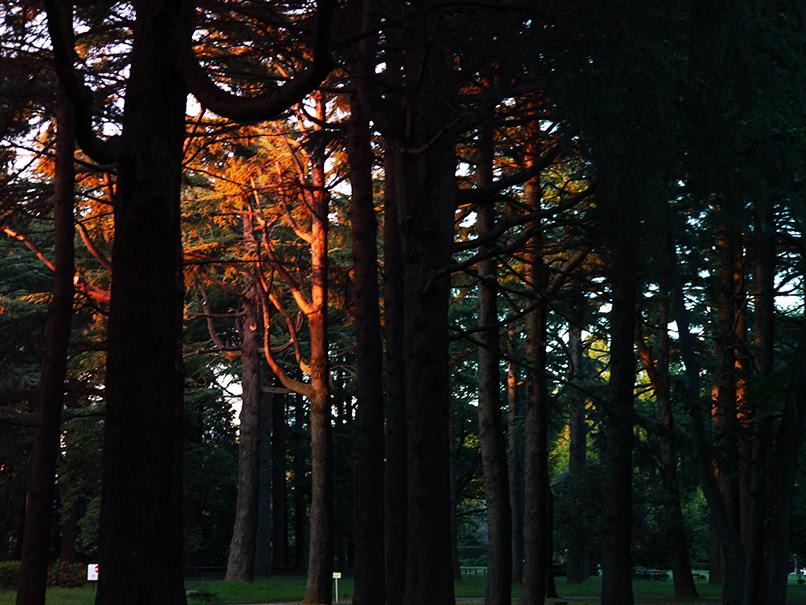 yoyogi park 4