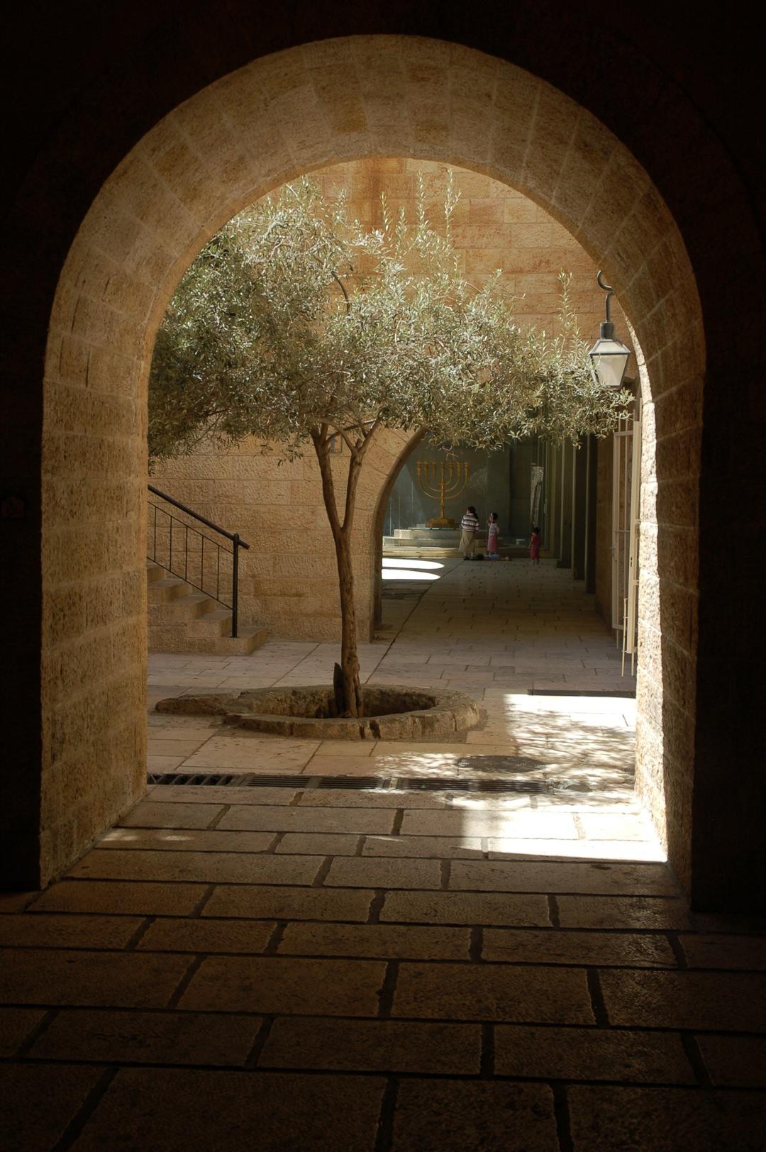 7. Rincón con olivo en Jerusalén. Autor, David55King