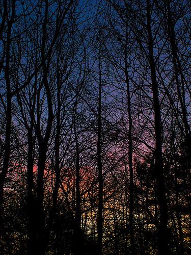 morning blue trees winter shadow red sky cold colors silhouette yellow sunrise lumix gold dawn pastel panasonic crisp g3 breakingdawn microfourthirds micro43rds panasonicdmcg3