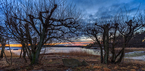 trees sunset water grass norway clouds rocks sigma 1224mm sarpsborg fredrikstad canon6d revebukta fromyoutous bentvelling