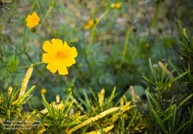 Vibrant Yellow