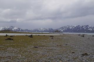 313 Salisbury Plain zeeberen