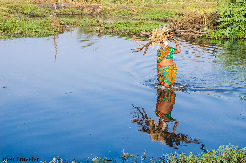 Women with firewood in knee deep water