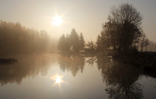 sun mist reflection sepia germany village thuringia conifer pone nadelbaum schackendorf