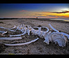 San Ignacio Whale Bone Sunset – Baja California, Mexico by Sam Antonio Photography