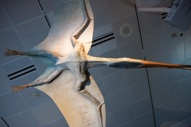 Pterosaurs: Flight in the Age of Dinosaurs at AMNH