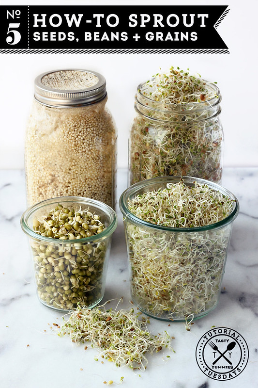 How-to Sprout: Seeds, Beans and Grains