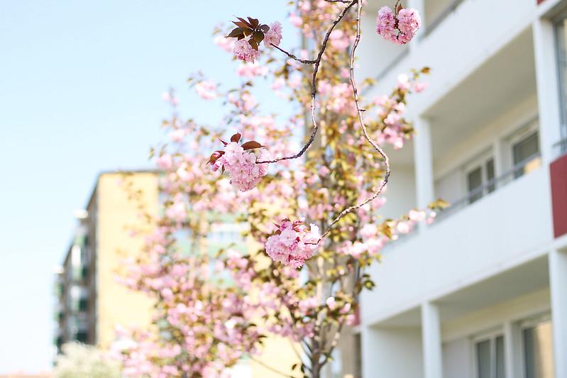 mitt möllans vårmarknad, fika på marias balkong och körsbärsblommor