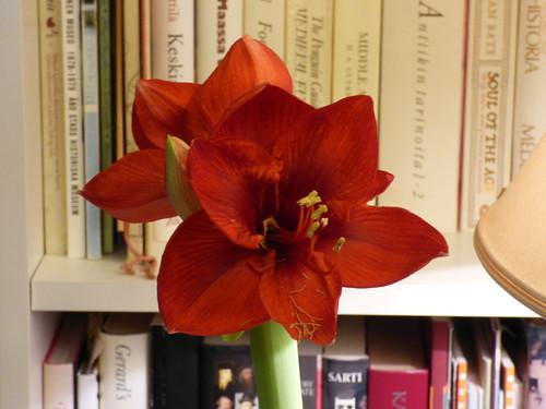 24.1.2015 uusi kukka