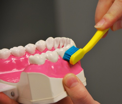 Dentist_model_teeth