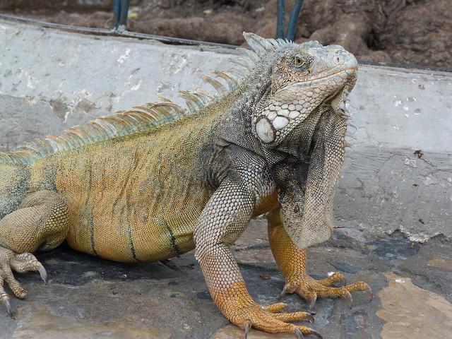 Parque de las iguanas en Guayaquil