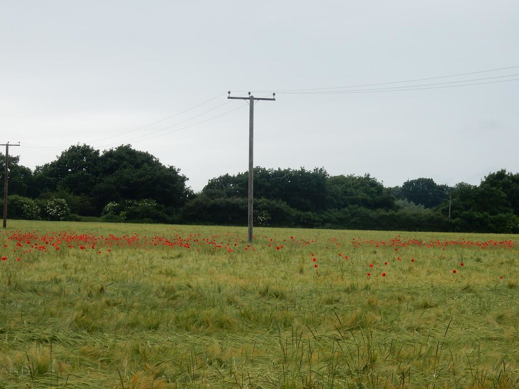 Poppies Bures to Sudbury