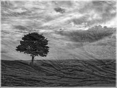 Cissbury ring tree