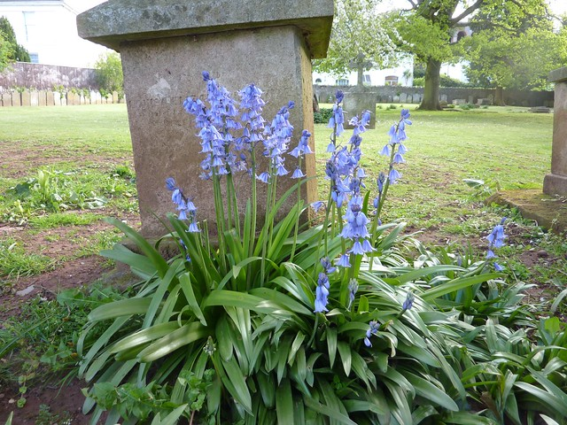 Spring at very old tombstone