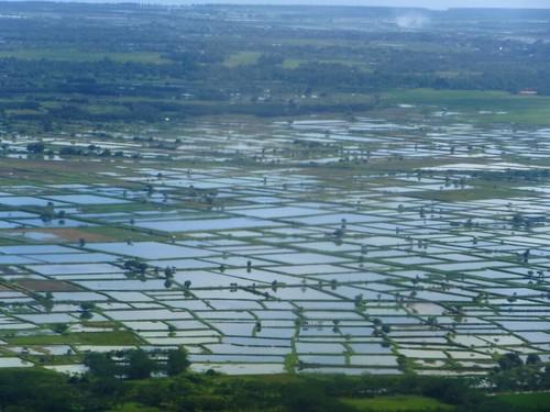 Sulawesi13-Makassar-Bau Bau (11)