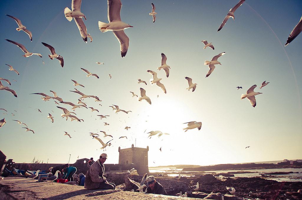 Dramatic seagulls crowd