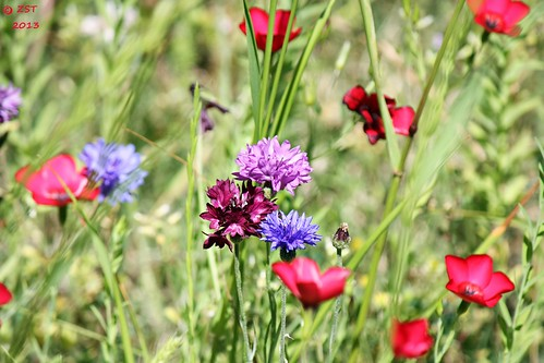 flowers plants wildflowers blooms thewoodlands canoneosdigitalrebelxsi zeesstof canonefs55250mmf456isii