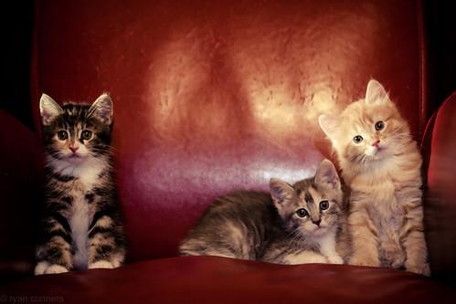 Los Tres Gatos