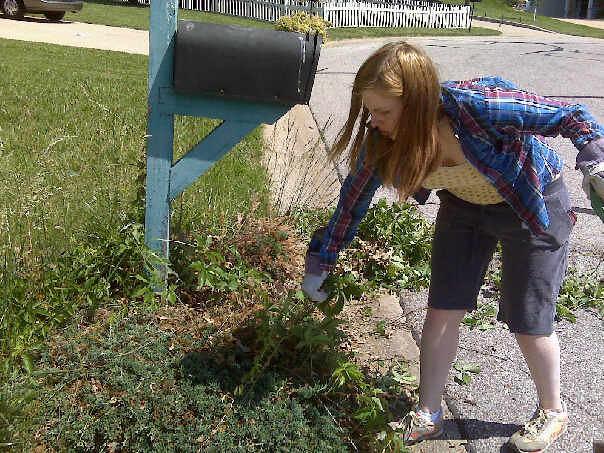 RachelleRemoveshrubsAndWeedsMay2009