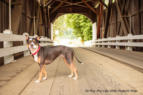 Harris Covered Bridge-4471