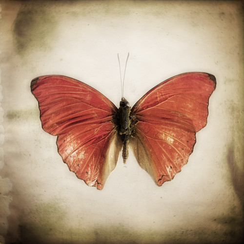 The Butterfly Project 4 by The Shutterbug Eye™