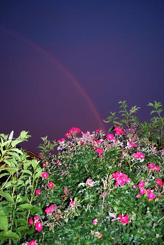 20130706_0238b Rainbow over Roses