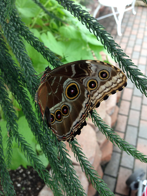 At The Butterfly House