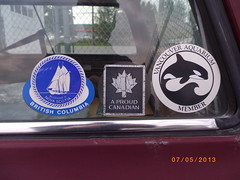 Window stickers, dealer stickers and bumper stickers