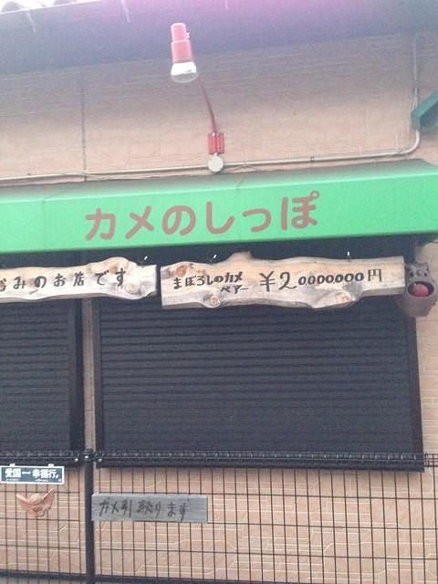 カメ専門店「カメのしっぽ」(東京都小平市)3