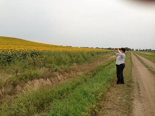 sunflowers IMG_0482