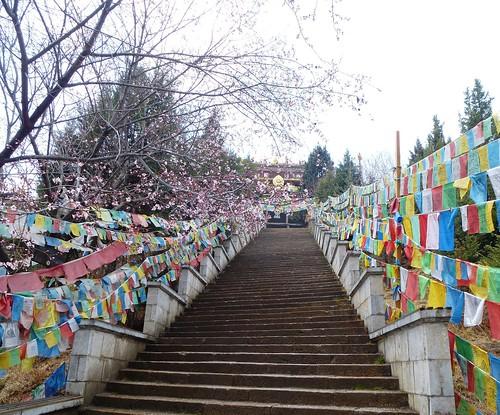 Yunnan13-Shangri La (17)