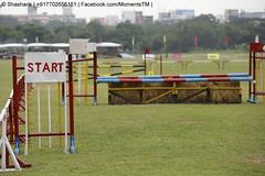 sports, hurdle, dog agility,