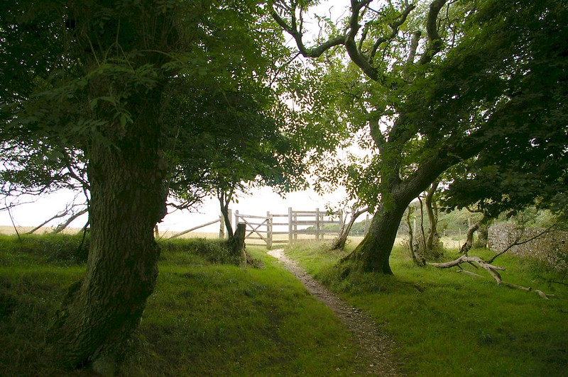 ash trees on the Downs by East Dean