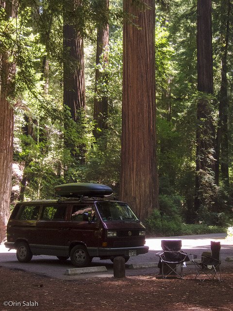 05Jul2013_redwoods-2621