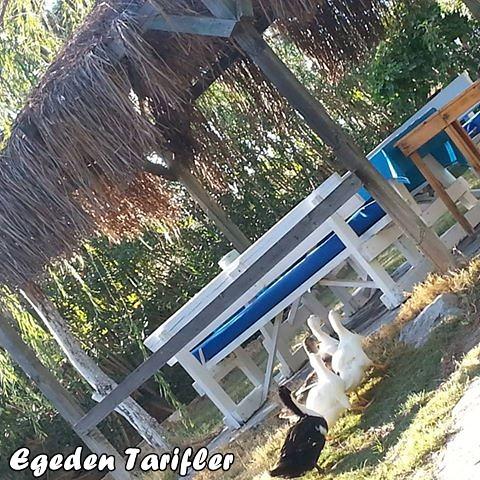 Bodrum-Safari 6