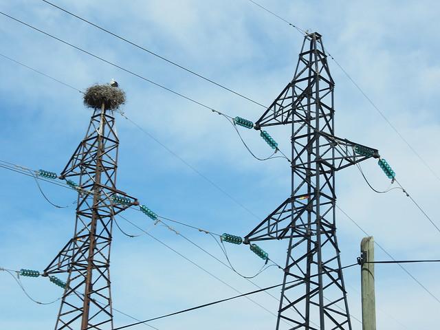 輸電鐵塔上築巢的鸛鳥