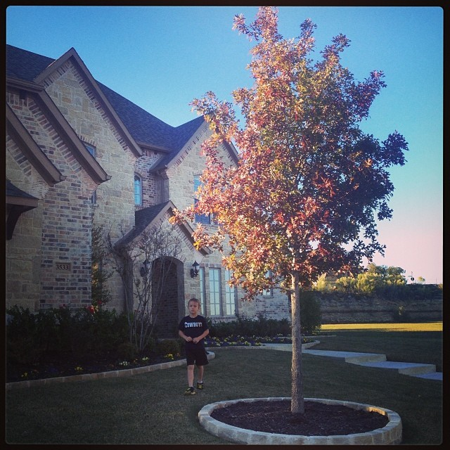 Why, yes those are fall leaves. Even here in Texas.