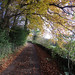 autumn stroll by -klik-