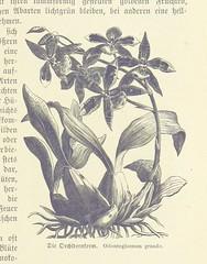 Image taken from page 241 of 'Das neue Buch der Reisen und Entdeckungen. O Spamer's illustrirte Bibliothek der Länder & Völkerkunde, etc. (Unter redaktion von F. von Hellwald und R. Oberländer.) vol. 1'